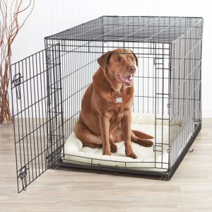1 of the best crate for dogs