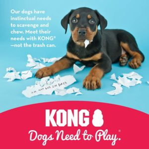 One of the best toys - The Kong toy