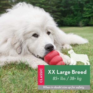 One of the best toys - The Kong XXL
