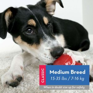 1 of the best DOG toys - The Kong MEDIUM BREED