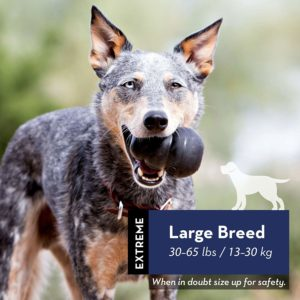 1 of the best DOG toys - The Kong large breed