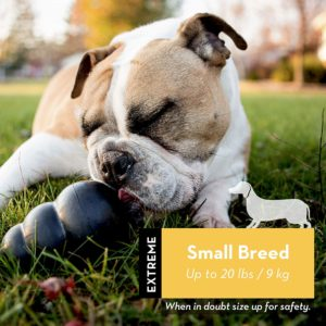 1 of the best DOG toys - The Kong small breed extreme