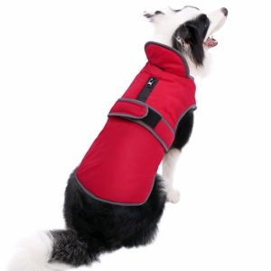 Our selection of the 2 best coats for dog